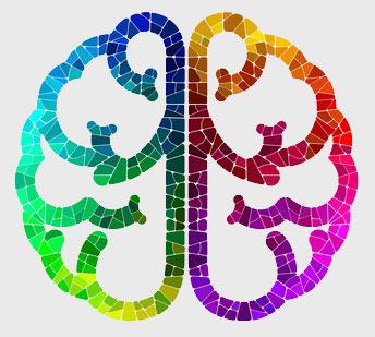 brain_06b